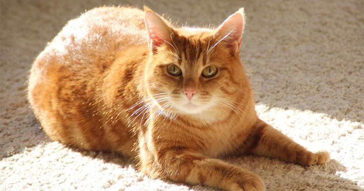 気持ちいいから、だけじゃない猫ちゃんの日向ぼっこ