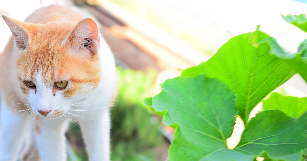 猫ちゃんの目やにを自宅でケア