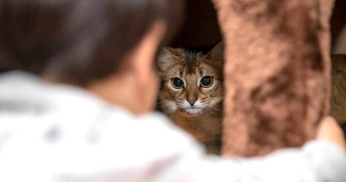 うちの猫、全然懐いてくれない