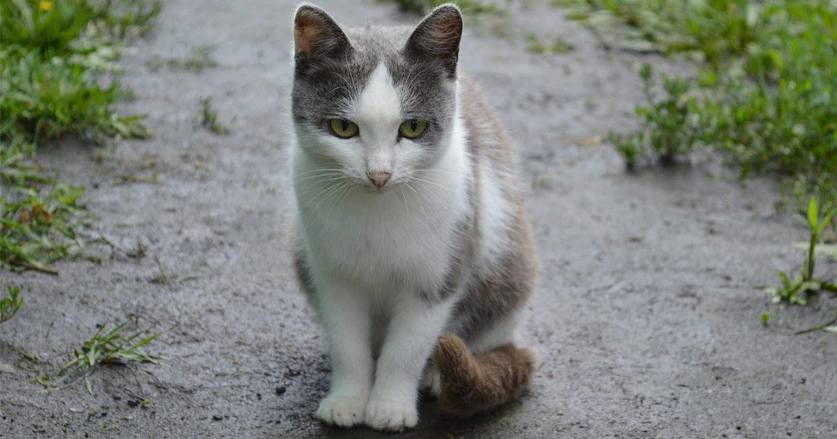 猫ちゃんの梅雨冷えにご注意