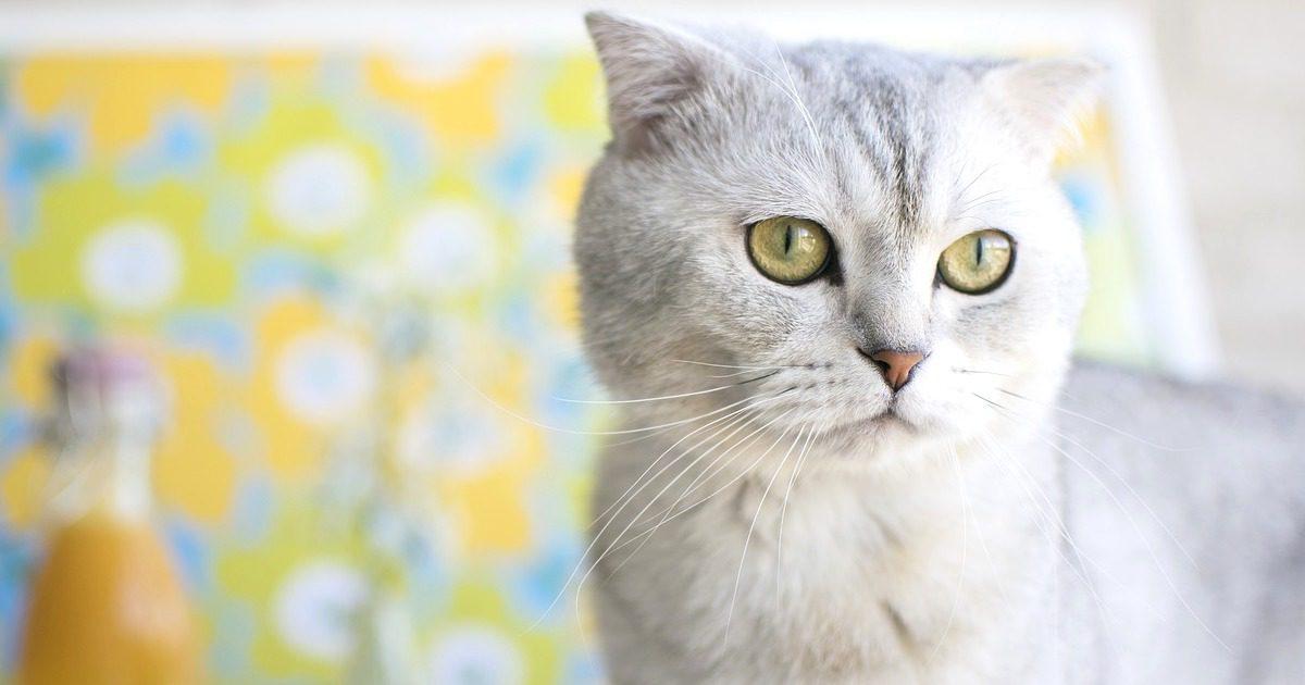 猫ちゃんのスキンケア