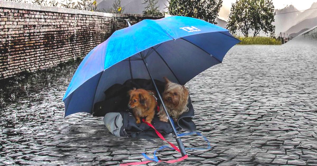 雨で散歩に行けない…そんな日の犬のストレス発散方法とは!?